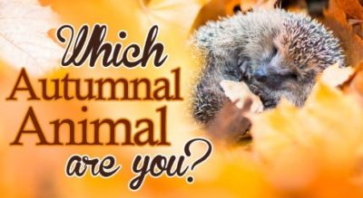 Which autumnal animal are you?