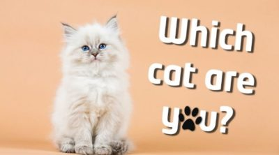 Which Cat Are You?